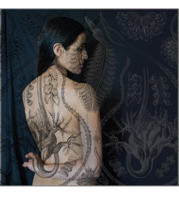 Tatiana Parcero, 'Universus #26', 2014, jdc Fine Art