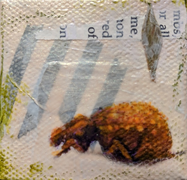 , 'Spotted Beetle #2,' , Sparrow Gallery