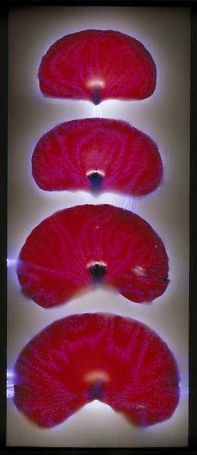 , 'Red Poppy Petals,' , Melissa Morgan Fine Art