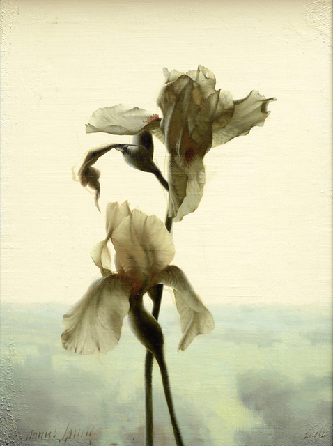 , 'Backlit Iris,' 2014, Gallery 1261