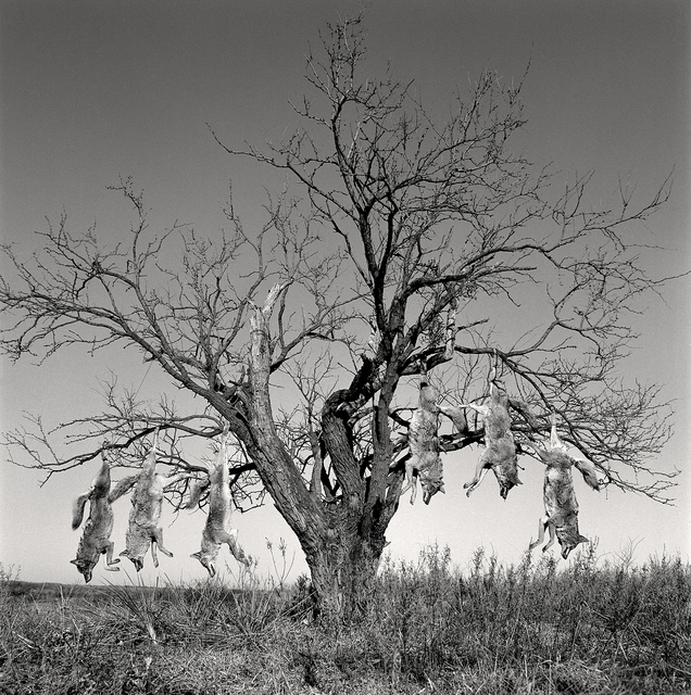 , 'Mesquite Tree with Coyotes, Lambshead Ranch, Albany, Texas, January 9, 1998 ,' , Gail Severn Gallery