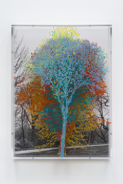 , 'Numbers and Trees: Central Park Series III: Tree #10, Ellen T,' 2016, Paula Cooper Gallery