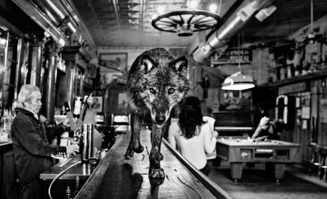 David Yarrow, 'The Wolf Of Main St', 2015, Hilton Asmus