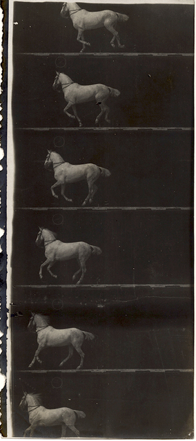 Étienne-Jules Marey, 'Print of Partial Film Strip of a White Horse in Six Frames', 1895-98, Contemporary Works/Vintage Works