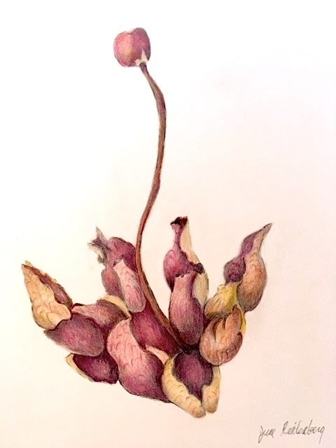 "June Reidenberg, '""Pitcher Plant""', 2019, The Galleries at Salmagundi"