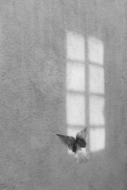 , 'Secret Window,' 2014, Galerie Sandhofer
