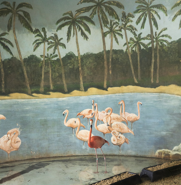 , 'Flamingo and Palm Trees,' , Galerie Dumonteil