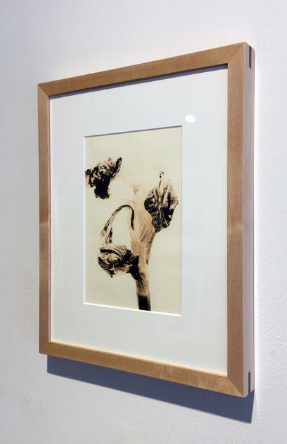 , 'Flora 6 Lith, Framed,' 2009, Duane Reed Gallery
