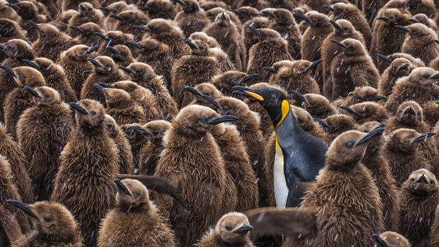 , 'Teen Spirit,' , Paul Nicklen Gallery