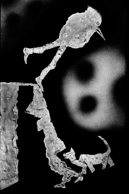 , 'Frolicking,' 2011, Zemack Contemporary Art