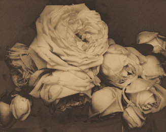 Heavy Roses, Voulangis, France
