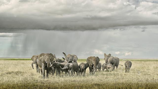 David Burdeny, 'Elephant Day Care, Amboseli, Kenya', 2019, Galerie de Bellefeuille