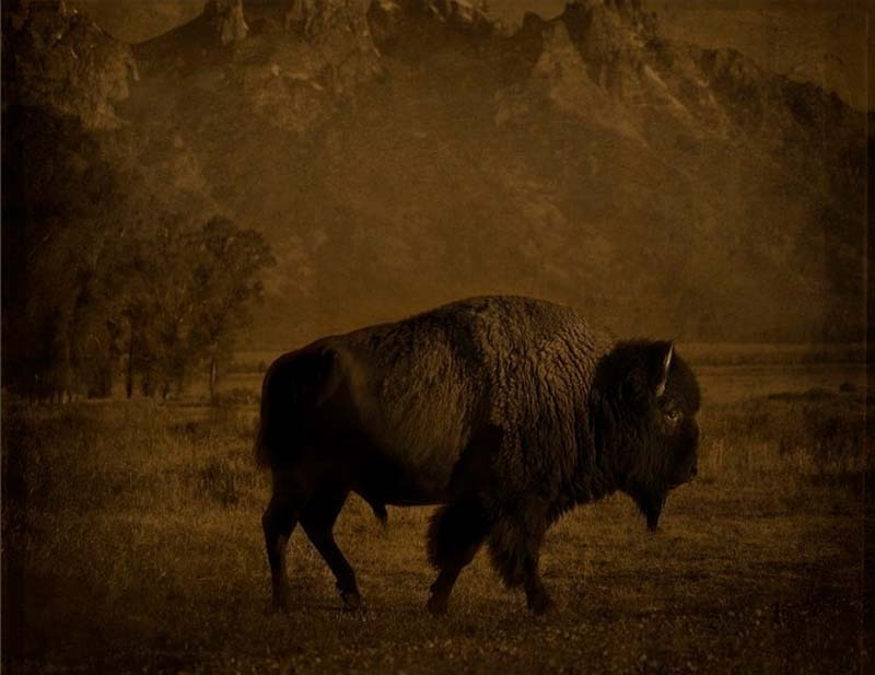 Jack Spencer - Buffalo/Tetons, Wyoming, 2007