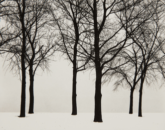 Harry Callahan, 'Chicago (Trees in Snow),' 1950, Phillips: Photographs (April 2017)