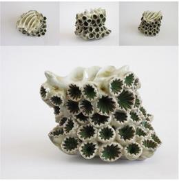 , 'Zoanthidea Seleractinia,' 2013, Rhona Hoffman Gallery