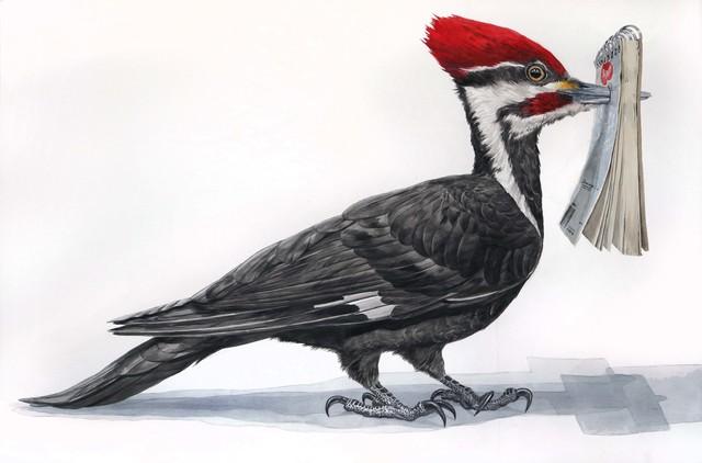 , 'Woodpecker Sketchbook,' 2018, Front Room Gallery