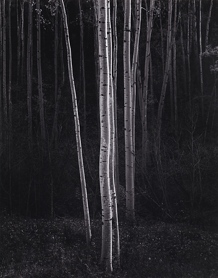 , 'Aspens, Northern New Mexico,' 1958, Scott Nichols Gallery