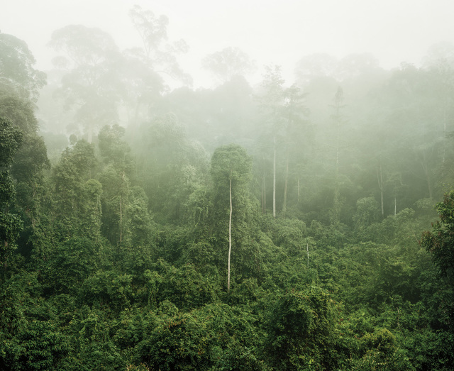 , 'Primary forest 03, Malaysia,' 2012, Galerie f5,6