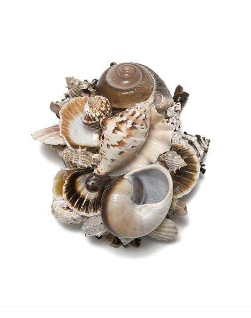 , 'Small Shell Series 19,' , Bill Lowe Gallery