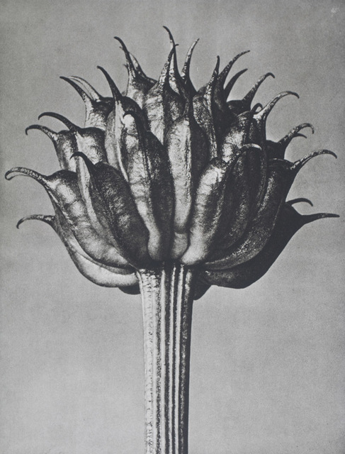 , 'Wundergarten der Natur. Neue Bilddokumente schöner Pflanzenformen,' 1932, Eric Chaim Kline Bookseller