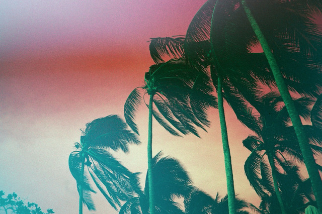 , 'Windy Palms,' 2015, LAMB Arts