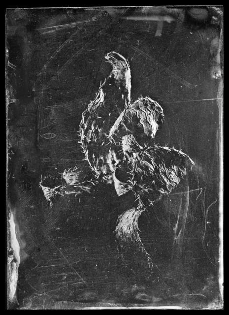 , 'Sabra Traces, dark,' 2017, °CLAIR Galerie