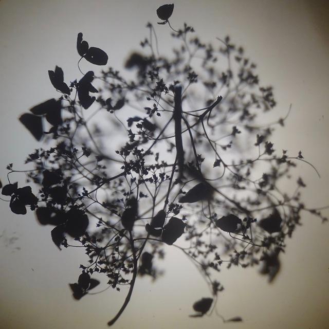 , 'Hydrangea I,' 2018, Open Mind Art Space