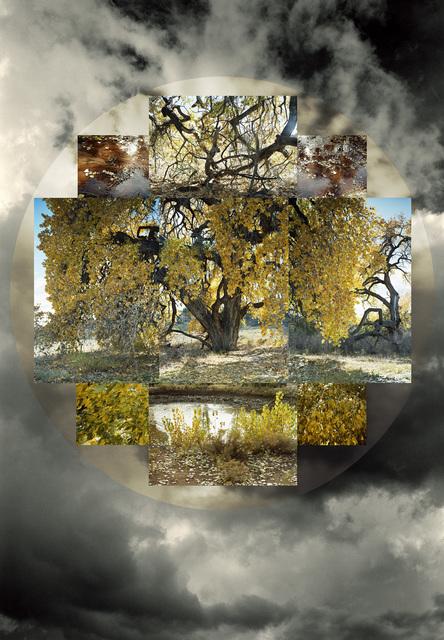 , 'Fall Seasonal,' 2010, David Richard Gallery