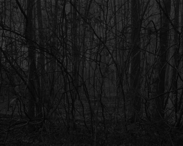 , 'Night Coming Tenderly, Black: Untitled #17 (Forest),' 2017, Rena Bransten Gallery