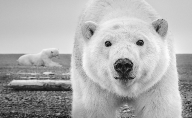 David Yarrow, 'Hello', ca. 2015, Samuel Lynne Galleries