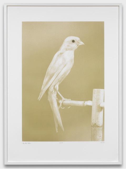 Carsten Höller, 'Canaries (2)', 2009, Gagosian