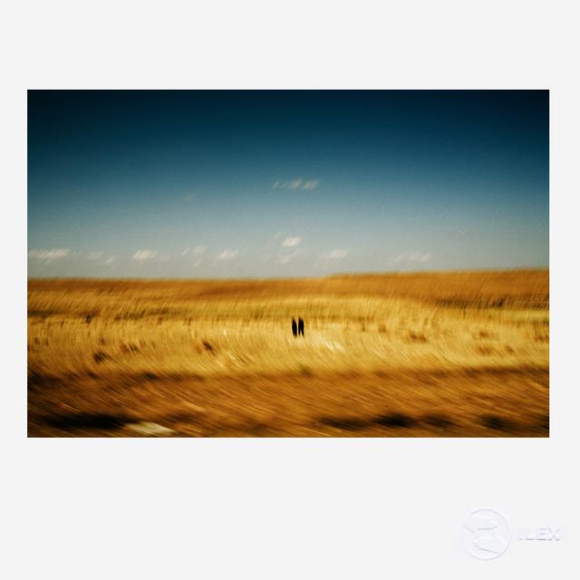 , 'Golden Field,' 2013, ILEX Gallery