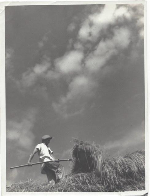 Ferenc Csík, 'Field worker', 1932, TRAPÉZ