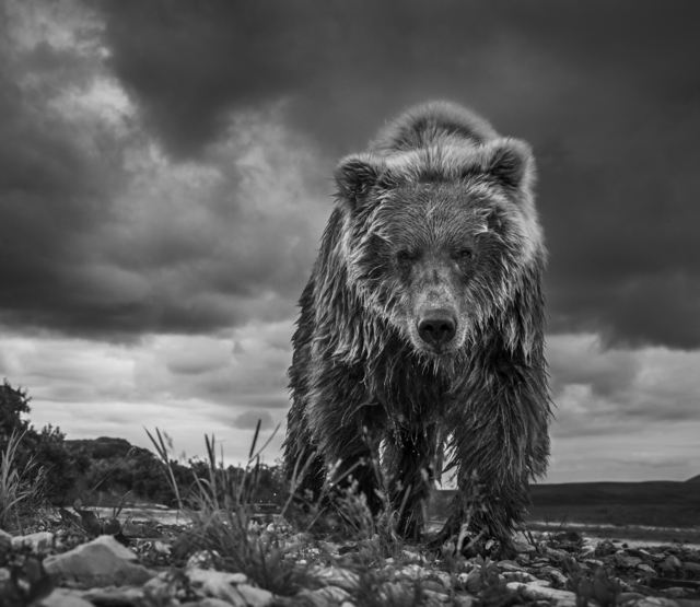 David Yarrow, 'Funnel Creek', 2016, Photography, Archival Pigment Print, Samuel Lynne Galleries