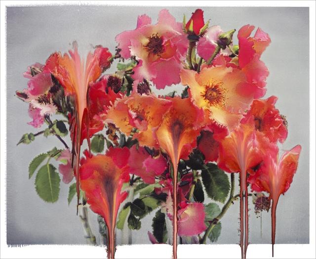 , 'Rose IV,' 2012 , Carrie Scott & Partners