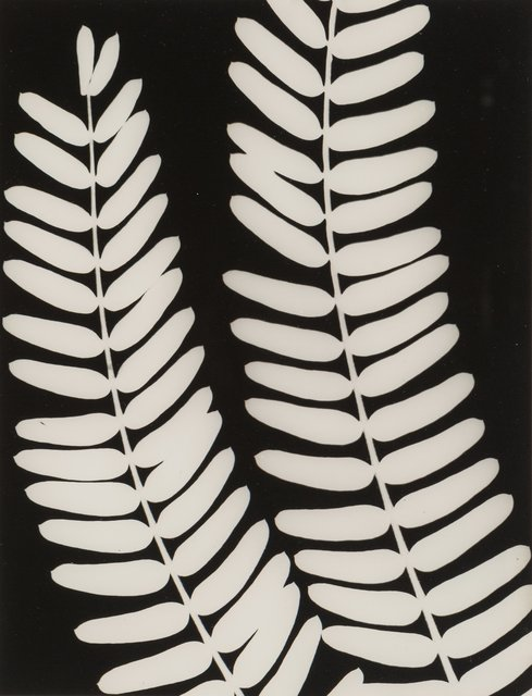 Unknown Artist, 'Untitled (Fern)', 1940, Heritage Auctions