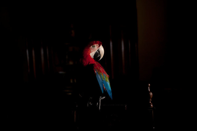 , 'Arara Vermelha II (da série Zoo) | Scarlet Macaw II (series Zoo),' 2015, Zipper Galeria