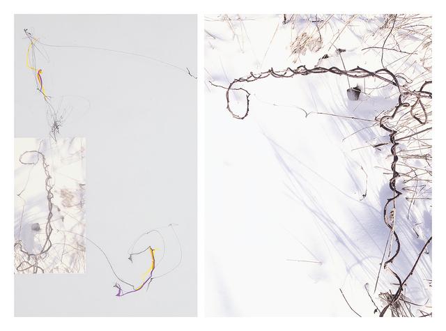 Sandi Haber Fifield, 'Untitled (LF 17 #176)', 2016, Tracey Morgan Gallery