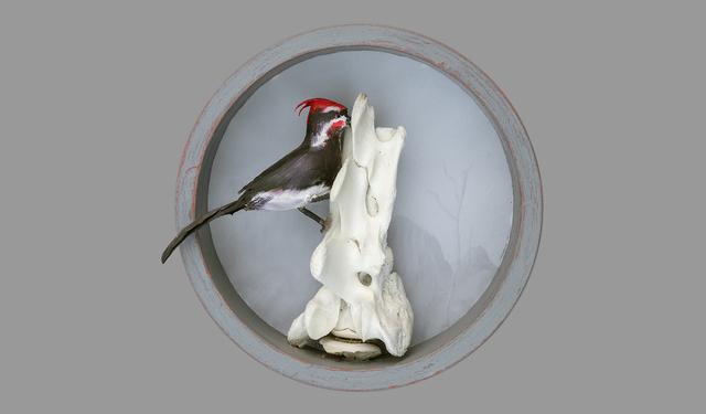 """, '""""Woodpecker"""",' , CK Art"""
