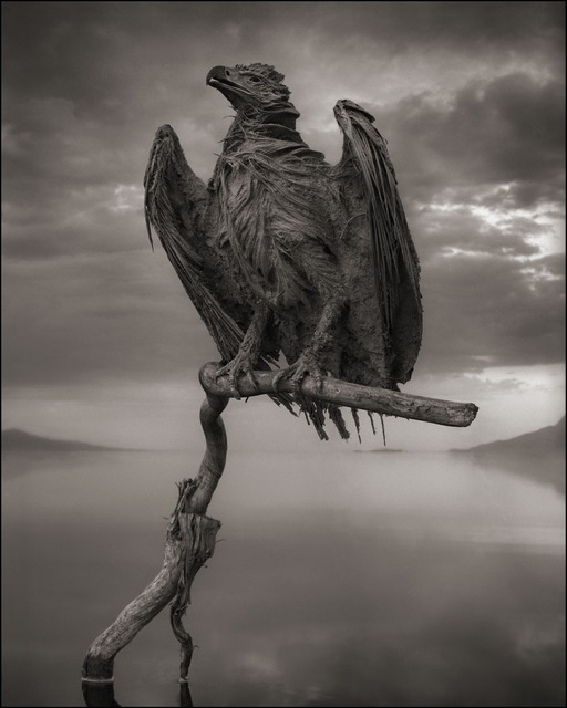 , 'Calcified Fish Eagle, Lake Natron, 2012,' 2012, photo-eye Gallery