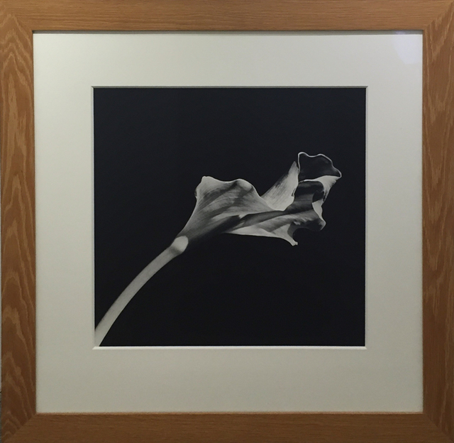 , 'Calla Lily,' 1986, William Campbell Contemporary Art, Inc.