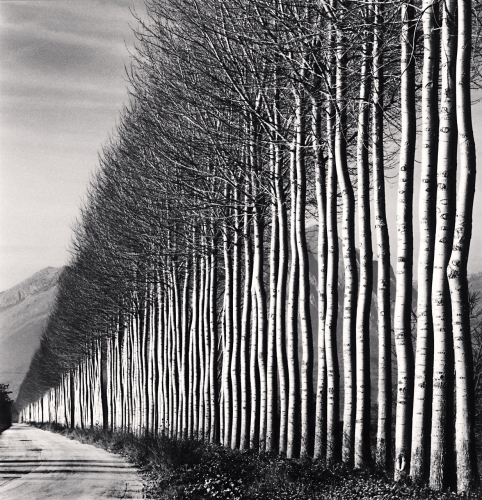 Michael Kenna, 'Poplar Trees, Fucino, Abruzzo, Italy', 2016, Weston Gallery