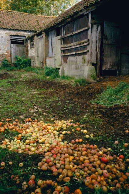 , 'Apples in the Farmyard,' 2006, Osborne Samuel