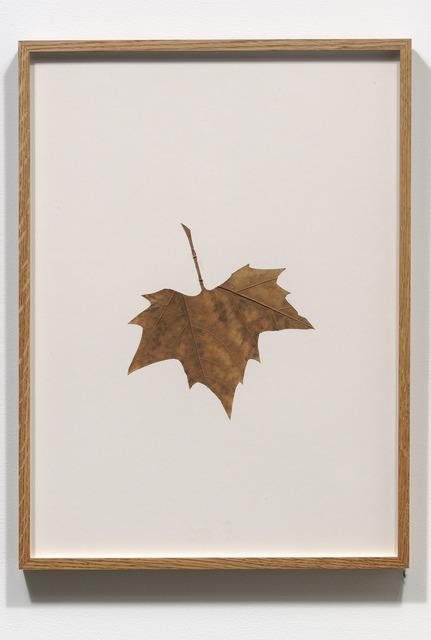 , 'Hybrids (VII),' 1978-1979, Jessica Silverman Gallery