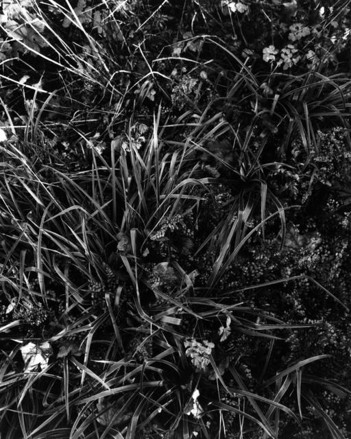 , 'Gartenstück Nr. 2, Seeshaupt,' 2016, Galerie Jordanow
