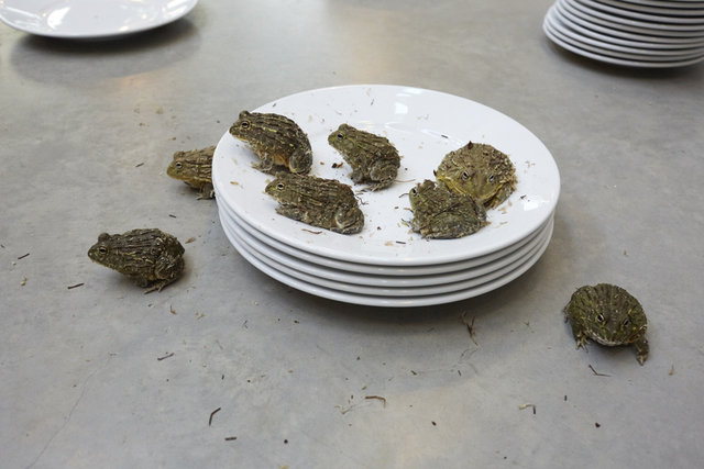 , 'Frogs and Plates No.17,' 2016, Suzanne Tarasieve