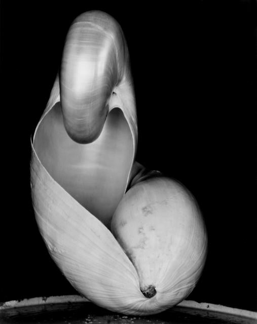 , 'Shell (14S),' ca. 1927, Weston Photography LLC