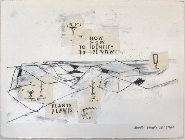 , 'how to identify plants,' 2016, 571 Projects