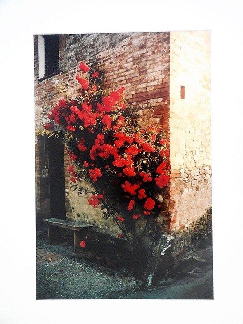Joel Meyerowitz, 'Tuscany, Roses Taverna d'Arbia, 1991', Late 20th Century, Photography, Lions Gallery