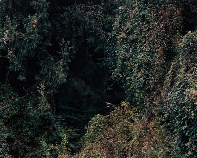 Ricarda Roggan, 'Baumstück 6', 2008, Phillips